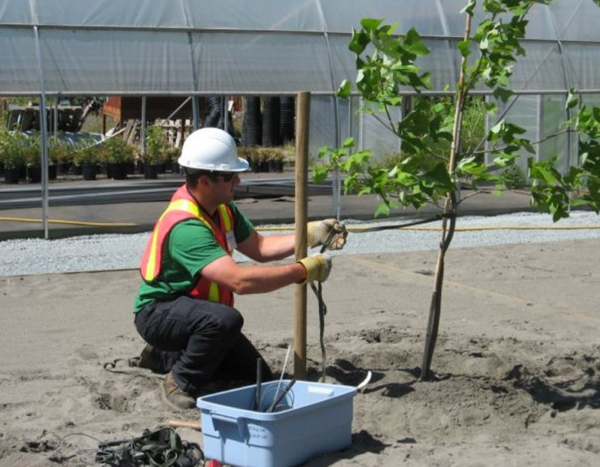 Nursery Workers - CNLA, Landscape Horticulture Certification Program for Technician.